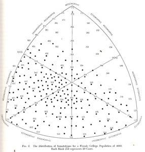 somatotypesfemale